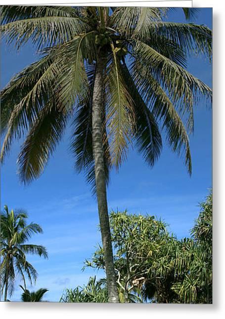 Niu Greeting Cards - Honomaele Kahanu Gardens Hale O Piilani Ulaino Hana Maui Hawaii Greeting Card by Sharon Mau