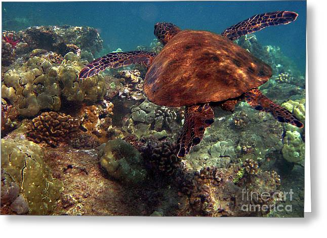 Greeting Card featuring the photograph Honu At 69 Beach by Bette Phelan
