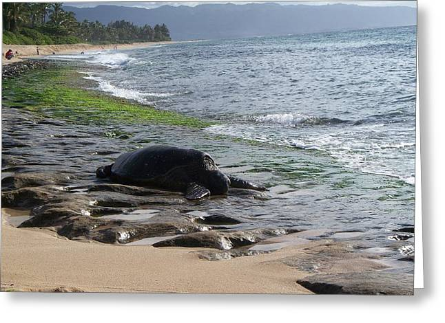 Laniakea Beach Greeting Cards - Honu at Laniakea Greeting Card by Grant Wiscour