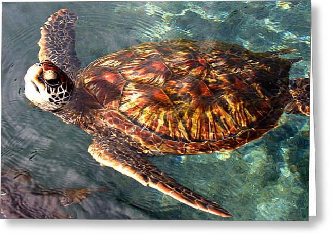 Honu Green Sea Turtle Maui Hawaii Greeting Card by Pierre Leclerc Photography