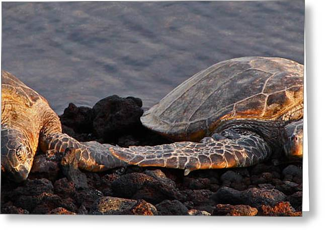Honu Romance Greeting Card