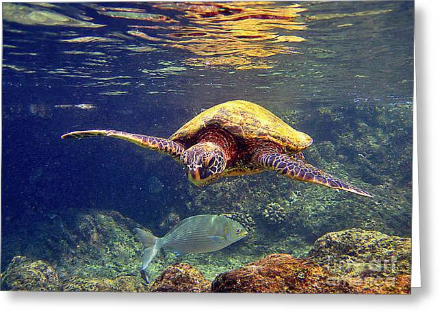 Honu With Reef Fish Greeting Card