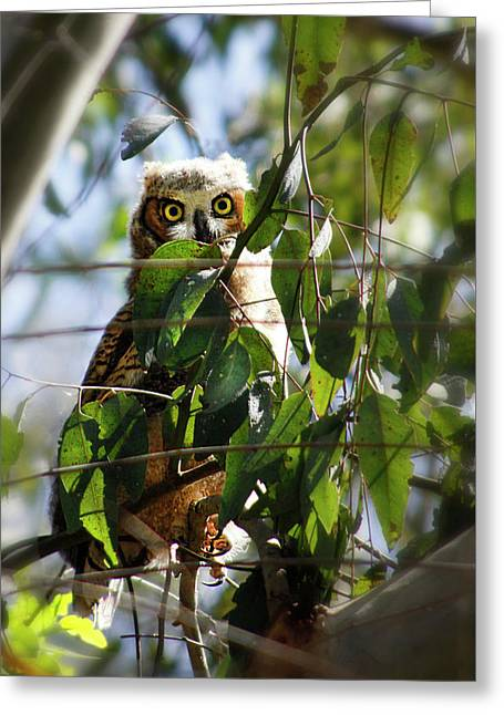 Hoo Goes There? Greeting Card by Diana Haronis