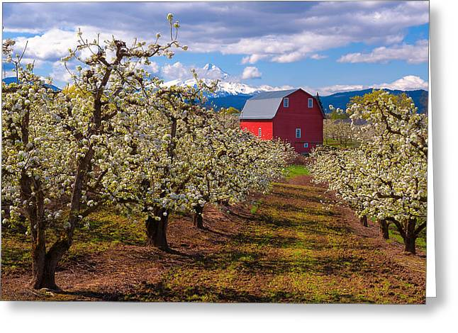 Hood River Spring Morning Greeting Card