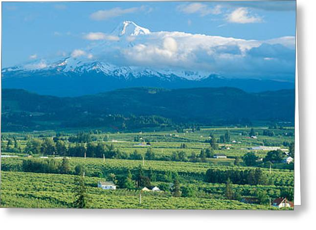 Hood River Valley And Mount Hood, Oregon Greeting Card by Panoramic Images