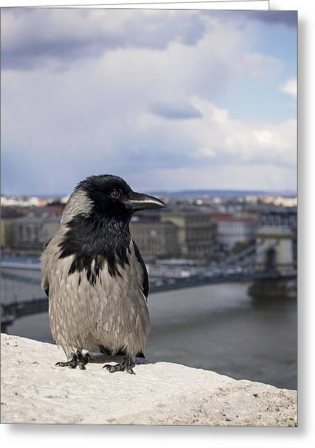Hooded Crow Greeting Card