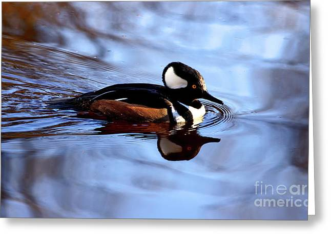Greeting Card featuring the photograph Hooded Merganser In Stanley Park by Terry Elniski