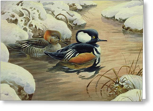 Hooded Mergansers On A Pool Greeting Card