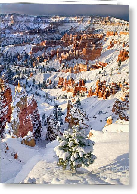 Greeting Card featuring the photograph Hoodoos And Fir Tree In Winter Bryce Canyon Np Utah by Dave Welling