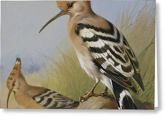 Hoopoes Greeting Card by Archibald Thorburn