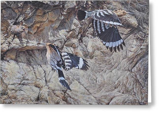 Hoopoes Feeding Greeting Card