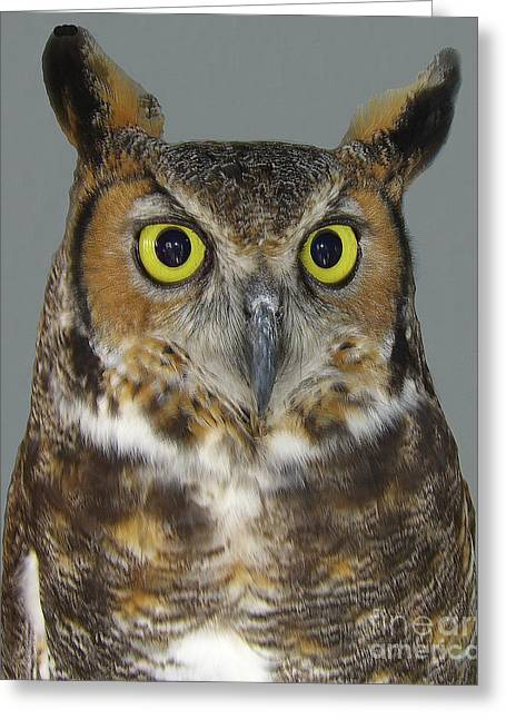 Greeting Card featuring the photograph Hoot-owl - I'm Looking At You by Merton Allen