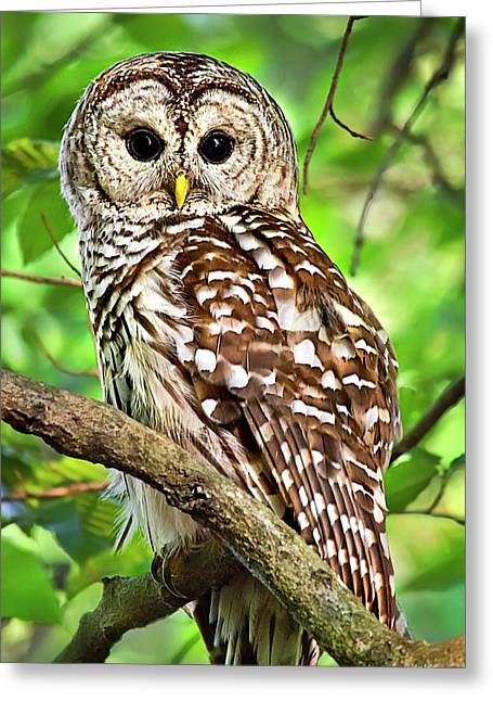 Greeting Card featuring the photograph Hoot Owl by Christina Rollo