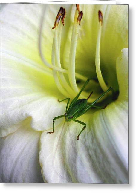 Alan Look Greeting Cards - Hop a Bloom Greeting Card by Alan Look