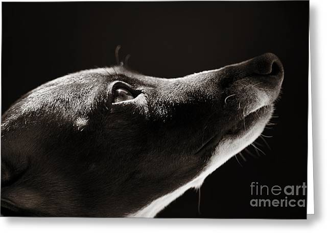 Greeting Card featuring the photograph Hopeful by Angela Rath