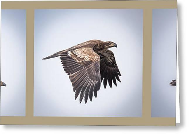 Horizontal Eagle Triptych Greeting Card by Paul Freidlund