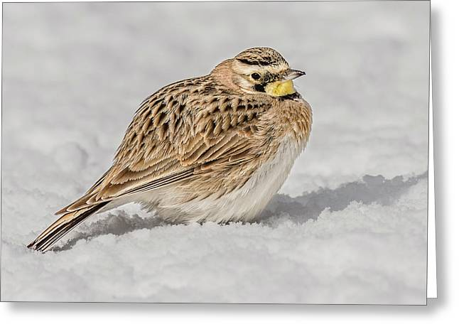 Horned Lark On The Snow Greeting Card