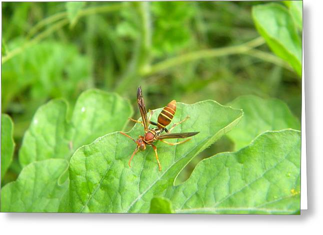 Hornet On Watermelon Greeting Card by Angi Nagel