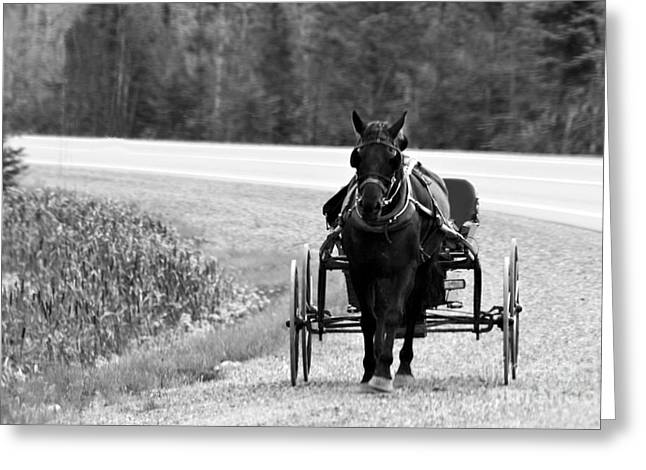 Greeting Card featuring the photograph Horse And Buggy by Marjorie Imbeau
