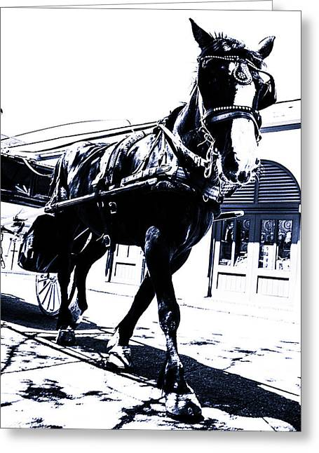 Horse And Carriage Greeting Card by Gestalt Imagery