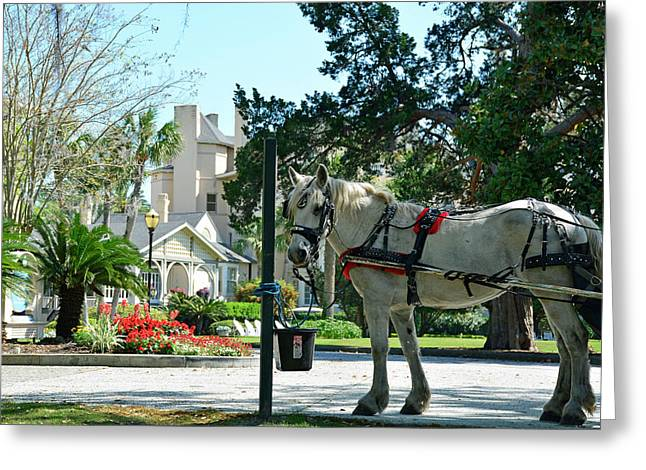 Horse And Jekyll Lsland Club Hotel Greeting Card by Bruce Gourley