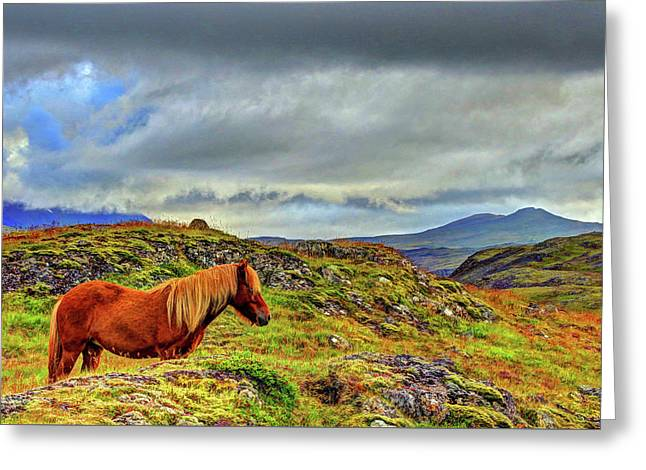 Greeting Card featuring the photograph Horse And Mountains by Scott Mahon