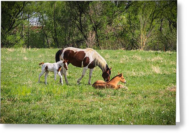 Horse And Ponies Greeting Card by Juli Ellen
