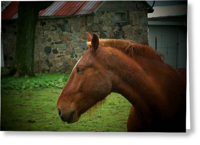 Horse And Shed Greeting Card by Michael L Kimble
