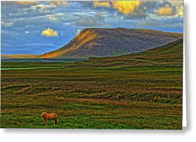 Greeting Card featuring the photograph Horse And Sky by Scott Mahon