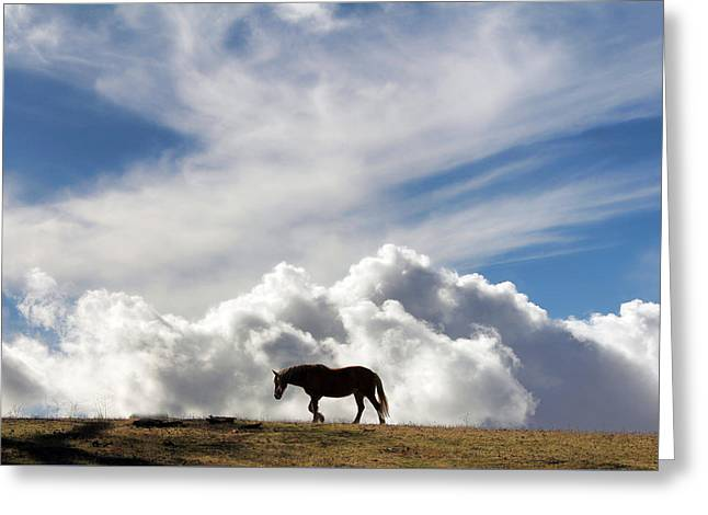Horse And Sky Greeting Card by Stephanie Laird