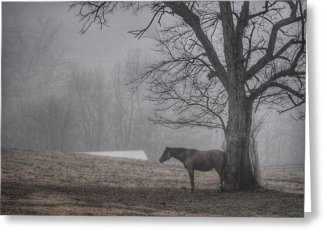 Horse And Tree Greeting Card by Sumoflam Photography