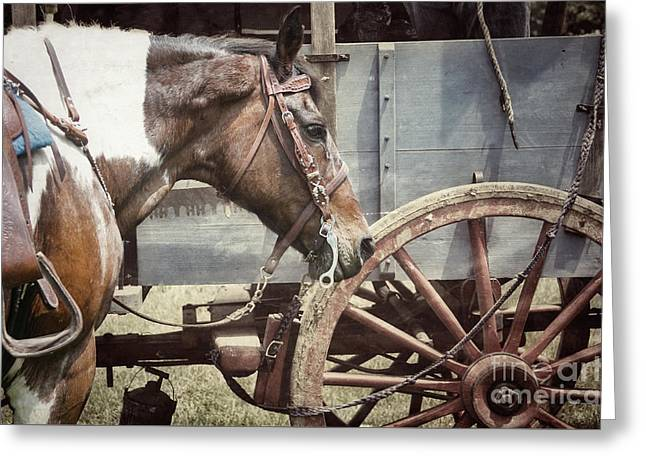 Horse And Wheel Greeting Card by Steven Digman