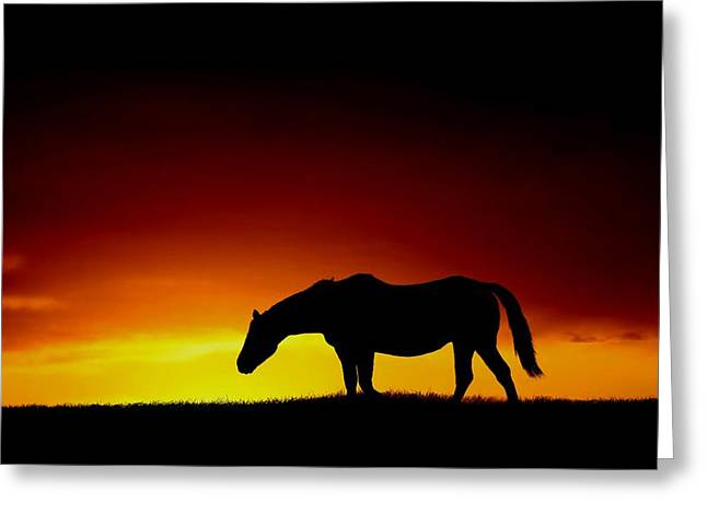 Horse At Sunset Greeting Card