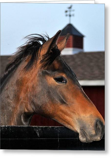 Horse Greeting Card by Brian Foxx