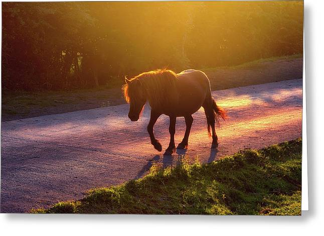 Horse Crossing The Road At Sunset Greeting Card