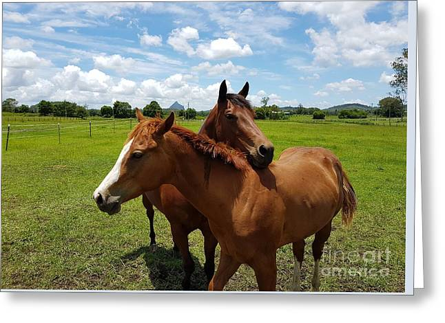 Horse Cuddles Greeting Card