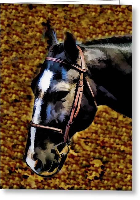 Horse Equus Ferus Caballus V1 Greeting Card by John Straton
