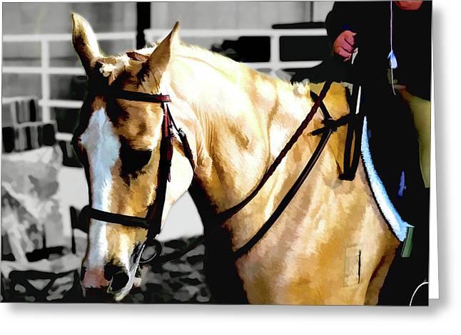 Horse Equus Ferus Caballus V2 Greeting Card by John Straton