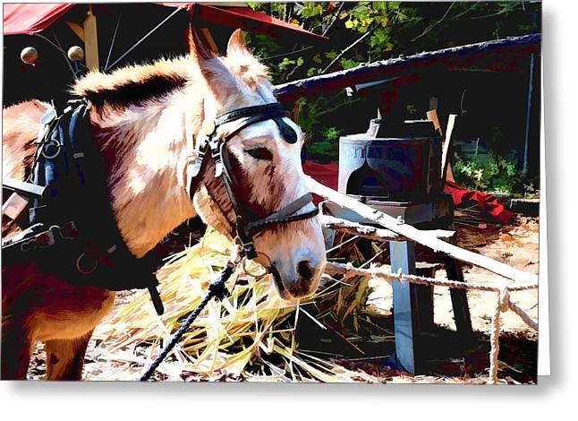 Horse Equus Ferus Caballus V6 Greeting Card by John Straton