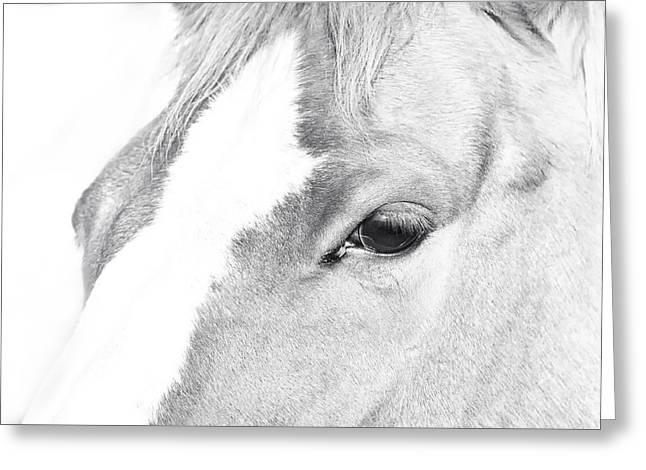 Horse Eye Black And White Greeting Card by Stephanie McDowell