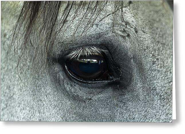 Horse Eye Greeting Card by John Greim