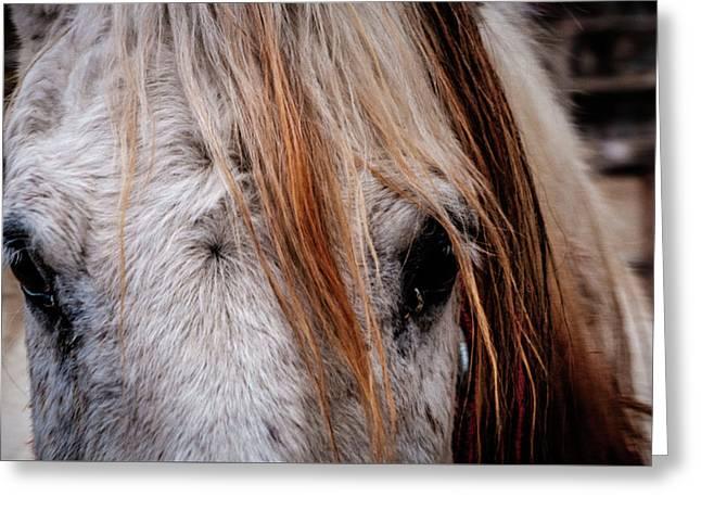 Horse Eyes Greeting Card by Okan YILMAZ