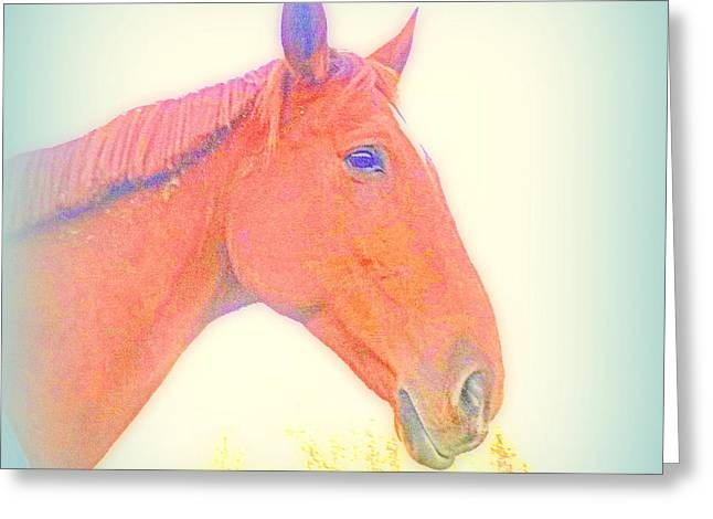 This Horse Is Ready To Face Anything  Greeting Card by Hilde Widerberg