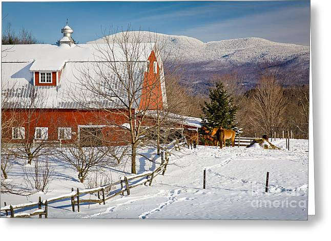 Horse Farm And Mount Mansfield Greeting Card by Susan Cole Kelly