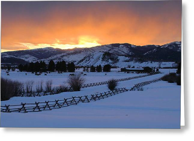 Horse Farm At Sunset Greeting Card