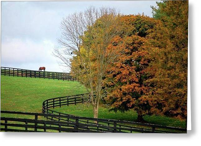 Horse Farm Country In The Fall Greeting Card by Sumoflam Photography