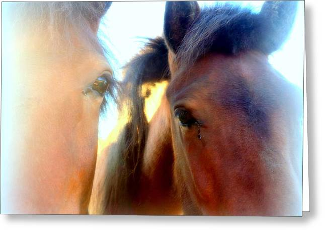 Young And Curious Horses Waiting For Anything To Happen Greeting Card by Hilde Widerberg