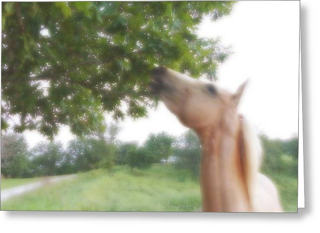 Horse Grazes In A Tree Greeting Card