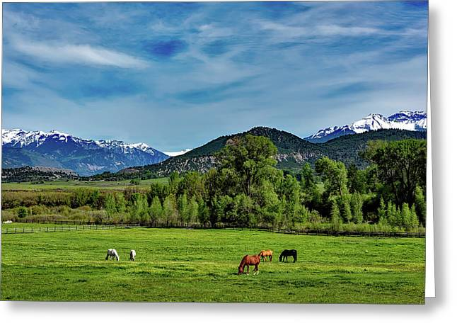 Horse Grazing Under The Colorado Mountains Greeting Card by Mountain Dreams