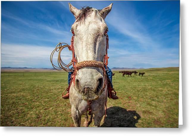 Horse Head Greeting Card by Todd Klassy